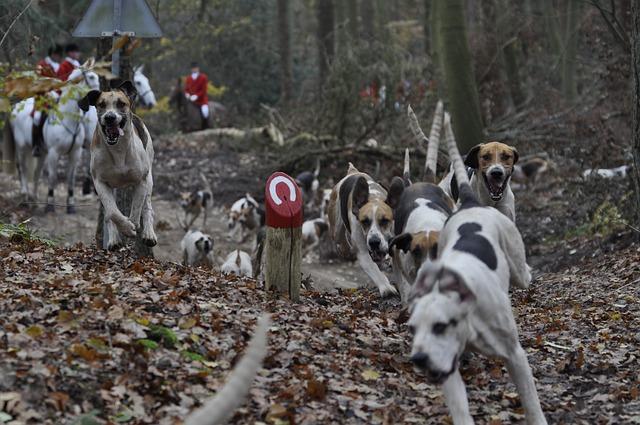 best-hunting-gun-dogs